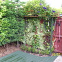 latest garden pics