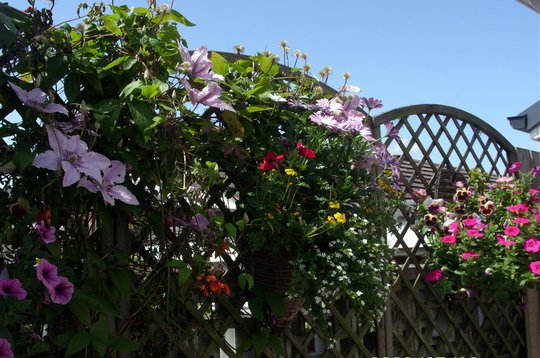 Patio Fence with a Medley of  Baskets