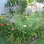 Back Garden - July 13, 09