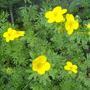 Flowering shrub - unknown