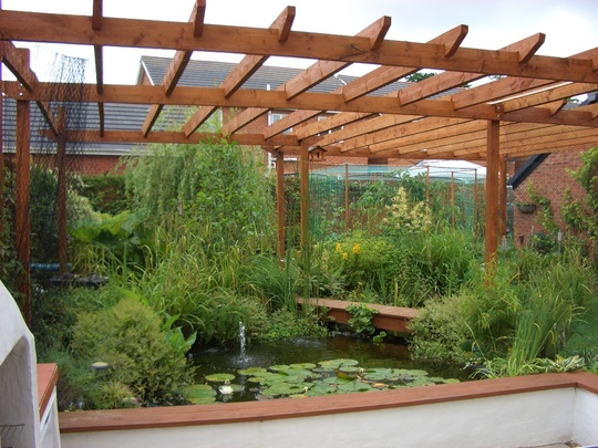 Our Pond And Pergola Grows On You