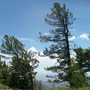 windswept pines - meeting point of Crest and Luna Trails