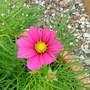 Wild_flowers_003