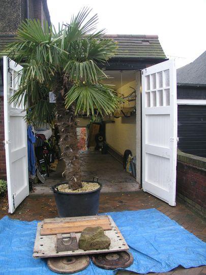 Blog 10.  Front garage - palm