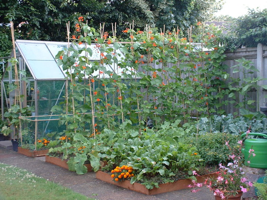 Doit yourself vegetable and flower garden designs info for Vegetable and flower garden ideas