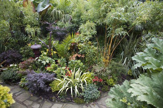 Blog 11. Jungle