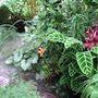 Jungle_7