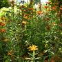Quail_bontanical_gardens_07_07_09_115