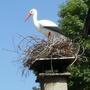 Stork ?