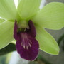 Close up of the orchid