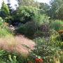 general view in garden