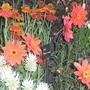 Rhs_hampton_court_flower_show..09.07._09_072