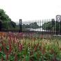 3_Pidgeons_Gate_Terrace_Gardens_Richmond.jpg