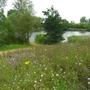 Wildflowers__2_Bedfont_Lakes_190709.jpg