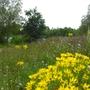 Wildflowers_Bedfont_Lakes_190709.jpg
