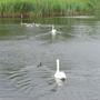 Wildlife_at_Bedfont_Lakes_190709_1.jpg