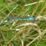 Dragonfly_Bedfont_Lakes_190709.jpg