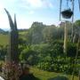 my garden in the day.