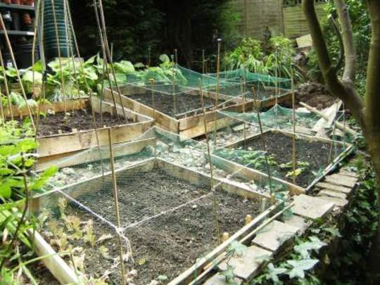 New veg beds with nets on