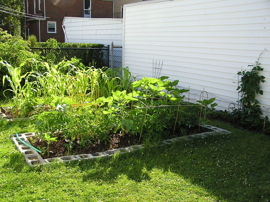 Vegetable beds (Solanum lycopersicum)
