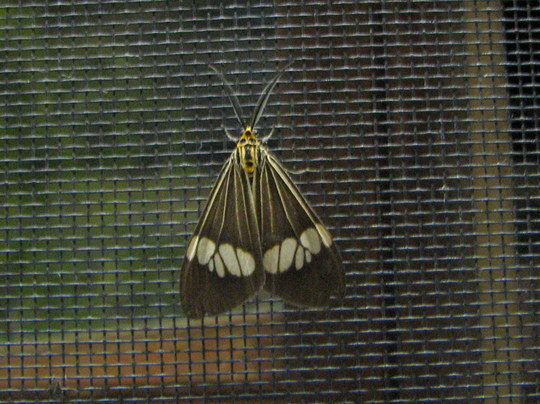 Garden visitor - outside the window