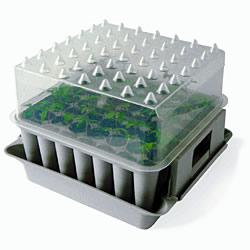 Windowsill Plant Propagator