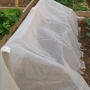 Carrot & Cabbage Root Fly Netting