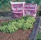 J. Arthur bowers cocoa shell mulch