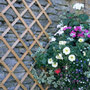 riveted diamond trellis