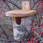 Silver birch log robin box