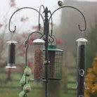 Deluxe bird feeding station kit
