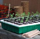 Self watering propagator tray
