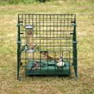 Sanctuary for ground feeding birds