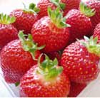 strawberry 'Albion' (PBR) (everbearer strawberry   autumn season fruiting)