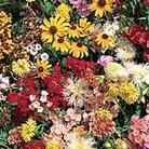 North American Wildflower Mix Seed