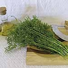 Herb Seed - Coriander Confetti