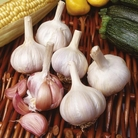 Garlic Sultop (Hardneck Type)