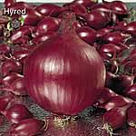 Onion Sets F1 Hyred - Heat Treated (200g Pack)