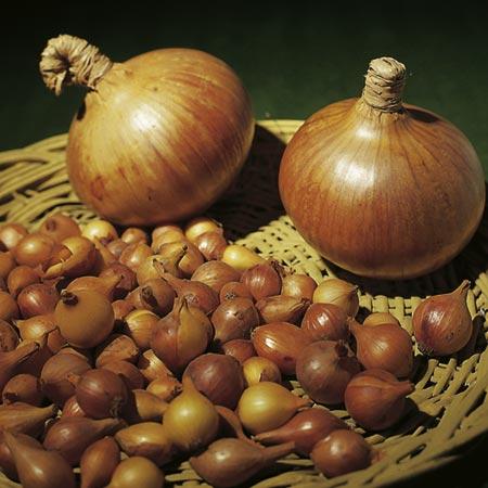 Onion Sets Sturon (200g)