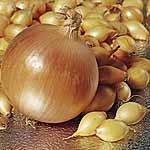 Onion Sets - F1 Hercules (400g Pack)