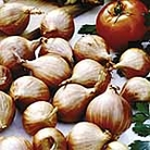 Shallot Bulbs Red Gourmet
