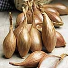 Shallot Bulbs Jermor - French