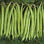 Speedy Veg Seed - Dwarf French Bean Speedy