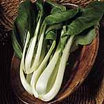 Chinese Pak Choi Seed