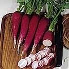 German Salad Radish Seed