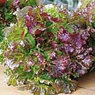 Red 'Picking' Lettuce Seed