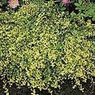 Herb Plants - Collection