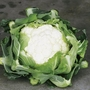 Cauliflower Plants - F1 Clapton