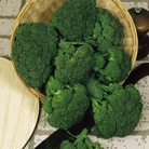 Broccoli F1 Green Magic Plants