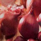 onion 'Red Baron' (onion sets)